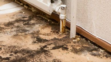 Photo of The Five Top Myths About Mold